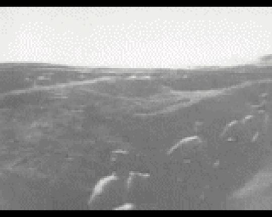 Primul război mondial-Coşna august 1916