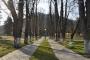 Trecerea timpului - Aleea dintre castani - Parcul Măgura