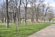 Ecologizarea şi plantarea de copaci în Parcul Măgura.
